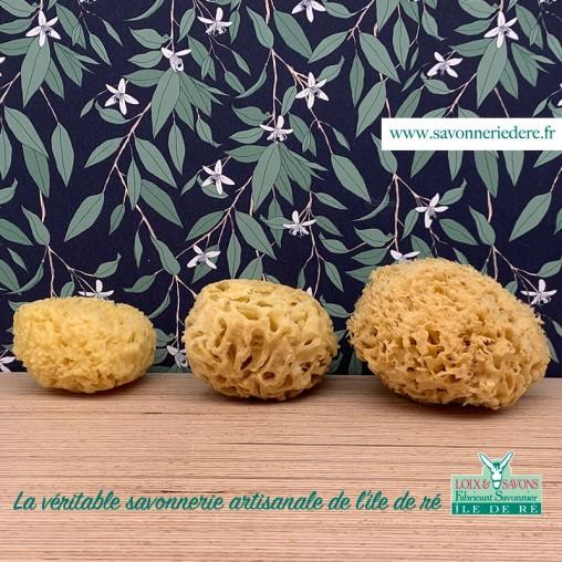 Éponge de méditerranée - savonnerie de l'ile de ré